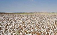 Azerbaijan pins hope on revival of cotton sector