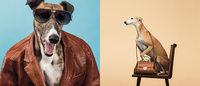 Trussardi setzt wieder auf den Windhund, sein Logo seit 40 Jahren