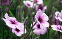 Essências florais da Madeira estão a ser usadas em terapias alternativas