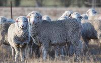 Marzotto, nuova partnership nella lana con il gruppo Schneider
