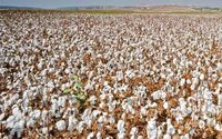 Brazil may become 2nd-largest cotton exporter in 2018/19, besting India
