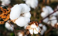 Cotton Australia, Google Arts & Culture join for e-project