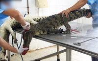 Cuir-fourrure : l'Inde bannit les importations de peaux de reptiles, visons et renards