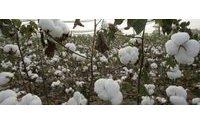 «Альпари»: Цены на семенной хлопок резко упали