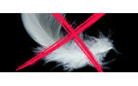 Elisabetta Franchi ends use of feathers