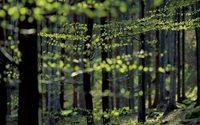 Lenzing bekommt USA-Zertifizierung für seine Viscose- und Modal-Fasern