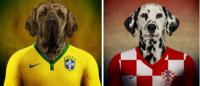 Cachorros vestem uniforme de seus países em campanha