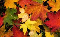 Folhas de outono tingem têxteis